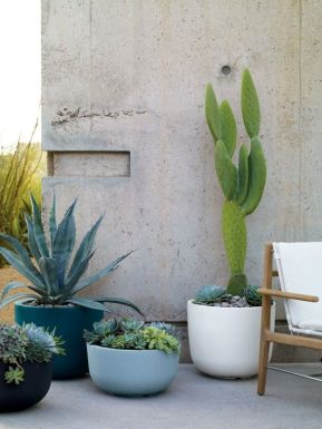 Cacti Patio / W Magazine