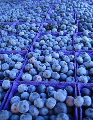Blueberries. Laura.bell - Flickr