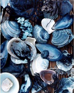 Seashells - littlebluedeer.com