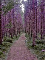 Purple Forest. Inverey. Great Britain, by Jordan Moffat Photography.